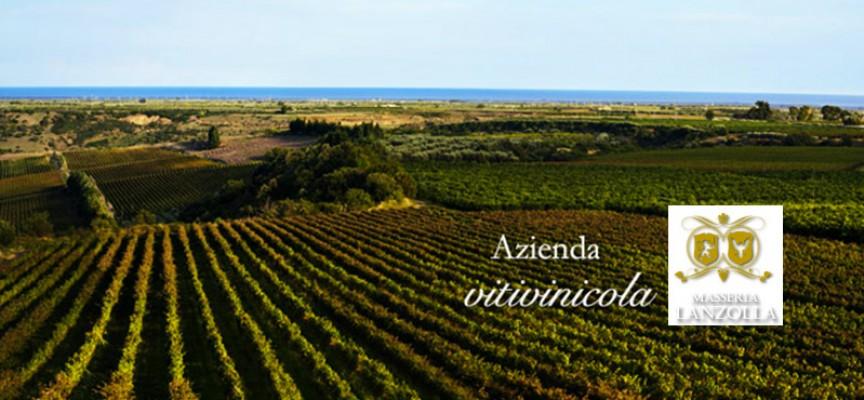 Azienda Agricola Masseria Lanzolla e Cantine Mininni